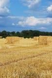 Hooibalen in hayfield Royalty-vrije Stock Afbeelding