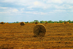 Hooibalen op Afrikaans landbouwbedrijf Royalty-vrije Stock Afbeelding