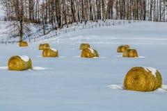 Hooibalen op een sneeuwgebied, cowboy Trail, Alberta, Canada Royalty-vrije Stock Fotografie