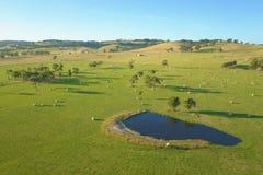 Hooibalen op landbouwgrond in Zuiden Gippsland Royalty-vrije Stock Fotografie