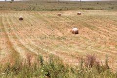 Hooibergen na oogst Stock Afbeelding