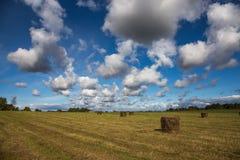 Hooibergen op het gebied onder blauwe hemel Stock Fotografie