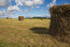 Hooibergen op het gebied onder blauwe hemel Royalty-vrije Stock Foto's