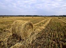 Hooibroodjes op een geoogst landbouwgebied stock afbeeldingen