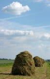 Hooiopper Stock Afbeelding