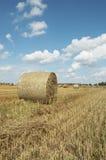 Hooiopper. Eind van de zomer Stock Foto
