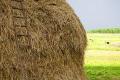 Hooiopper in het dorp Stock Foto