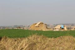 Hooistapel op het gebied van het land van Punjab stock afbeelding