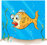Hook Fish Royalty Free Stock Image