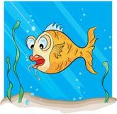 Hook Fish royalty free stock image