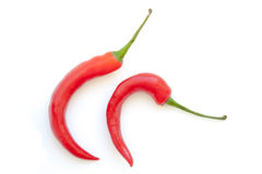 Hook shape chili pepper on white background Royalty Free Stock Image
