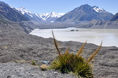 Hooker lake, New Zealand Stock Image