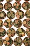 Cactussen in rij Stock Foto's
