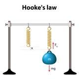 Hookes lag styrkan är proportionell till förlängningen vektor illustrationer