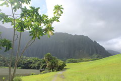 Hoomaluhia Botanical Gardens. The Koolau mountain range majestically stand above a quiet grassy field and lake Stock Photo
