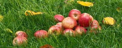 Hoop van appelen stock afbeelding