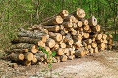 Hoop van brandhout in een bos stock foto's