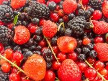 Hoop van geassorteerde rijpe bosvruchten en andere bessen Royalty-vrije Stock Foto's