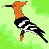 Hoopoe. Vector colored illustration of hoopoe Royalty Free Stock Images