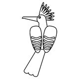 Hoopoe bird exotic thin line. Vector illustration eps 10 Royalty Free Stock Images