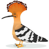 Hoopoe Bird. Illustration of a cartoon funny elegant hoopoe bird male character, real famous country species with orange, white and black feather and its famous Royalty Free Stock Photo