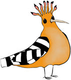 Hoopoe cartoon. Strange hoopoe bird with puzzled expression Stock Photos