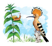 Hoopoe snail. Colourful bird the hoopoe was found with the snail crest beak Stock Image