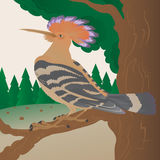 Hoopoe on a tree branch Stock Photo