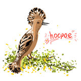 Hoopoe vector illustration. Hand-drawing tropical bird (Upupa ep. Ops) sitting on branch isolated on a white background Stock Photo