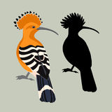 Hoopoe vector illustration style flat silhouette. Set Royalty Free Stock Image