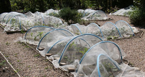 Hoops and Fleece. Plastic Hoops and Fleece to Protect Garden Vegetables stock photo