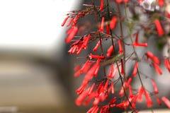 Hoornbloemen royalty-vrije stock foto