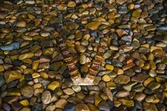 Hoornen van bergschapen die op de rotsen liggen Stock Foto's