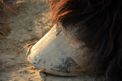 Hooves of a draft horse close up Royalty Free Stock Images