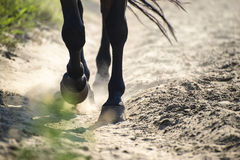 Hooves in dust Stock Photo
