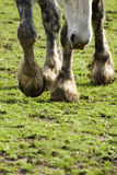Hooves of horse on field Stock Image