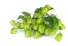 Hop 05 Stock Photos