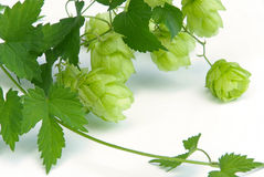 Hop 09 Stock Photography