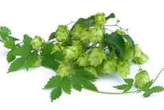Hop 11 Royalty Free Stock Photo