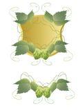 Hop Royalty-vrije Stock Afbeelding
