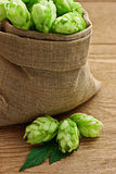 Hop. In a burlap bag on wooden background royalty free stock images