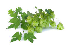 Hop Royalty Free Stock Photos