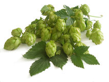 Hop Royalty Free Stock Photo
