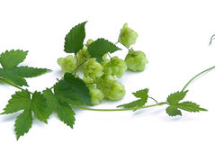 Hop Royalty Free Stock Images