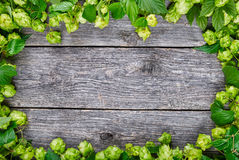 Hop background Royalty Free Stock Image