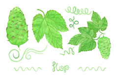 Hop, beer brewing set. Hand-drawn swirles, flower Stock Photo