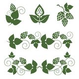 Hop  borders and design elements Stock Images
