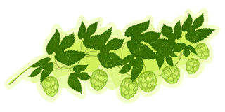 Hop branch Royalty Free Stock Photos