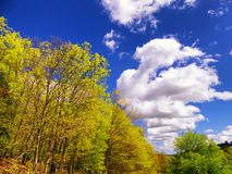 Hop brook dam beautiful view. Hop Brook Dam trees against blue sky and white clouds in Naugatuck connecticut on a sunny blue sky day Royalty Free Stock Images