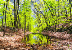Hop brook dam state park in Naugatuck. A tree covered flooded hiking trail within hop brook state park in Naugatuck Connecticut Royalty Free Stock Images